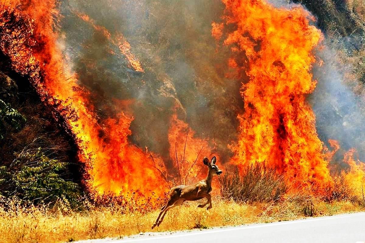 Общие правила безопасности во время лесного пожара