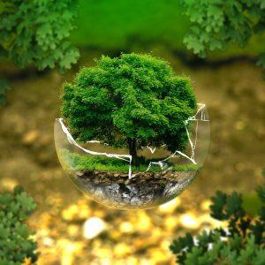 День эколога. Международный день охраны окружающей среды
