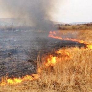 Пожары на хлебных полях