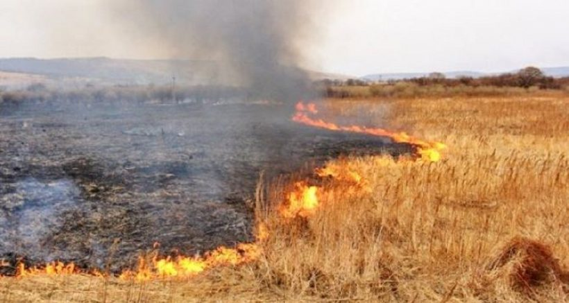 пожар на хлебном поле