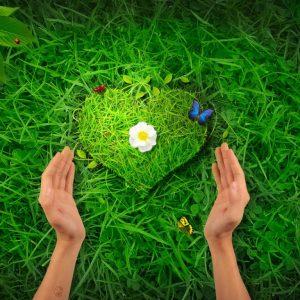 Давайте беречь природу – вместе!