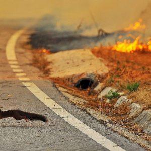 Пожары в Ясиноватой за 6 месяцев 2021 г.
