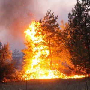 Лесные пожары – беда без границ!